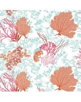 Molokini Coral
