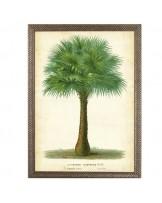 Palm Tropics II