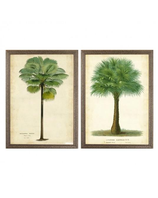 Palm Tropics I