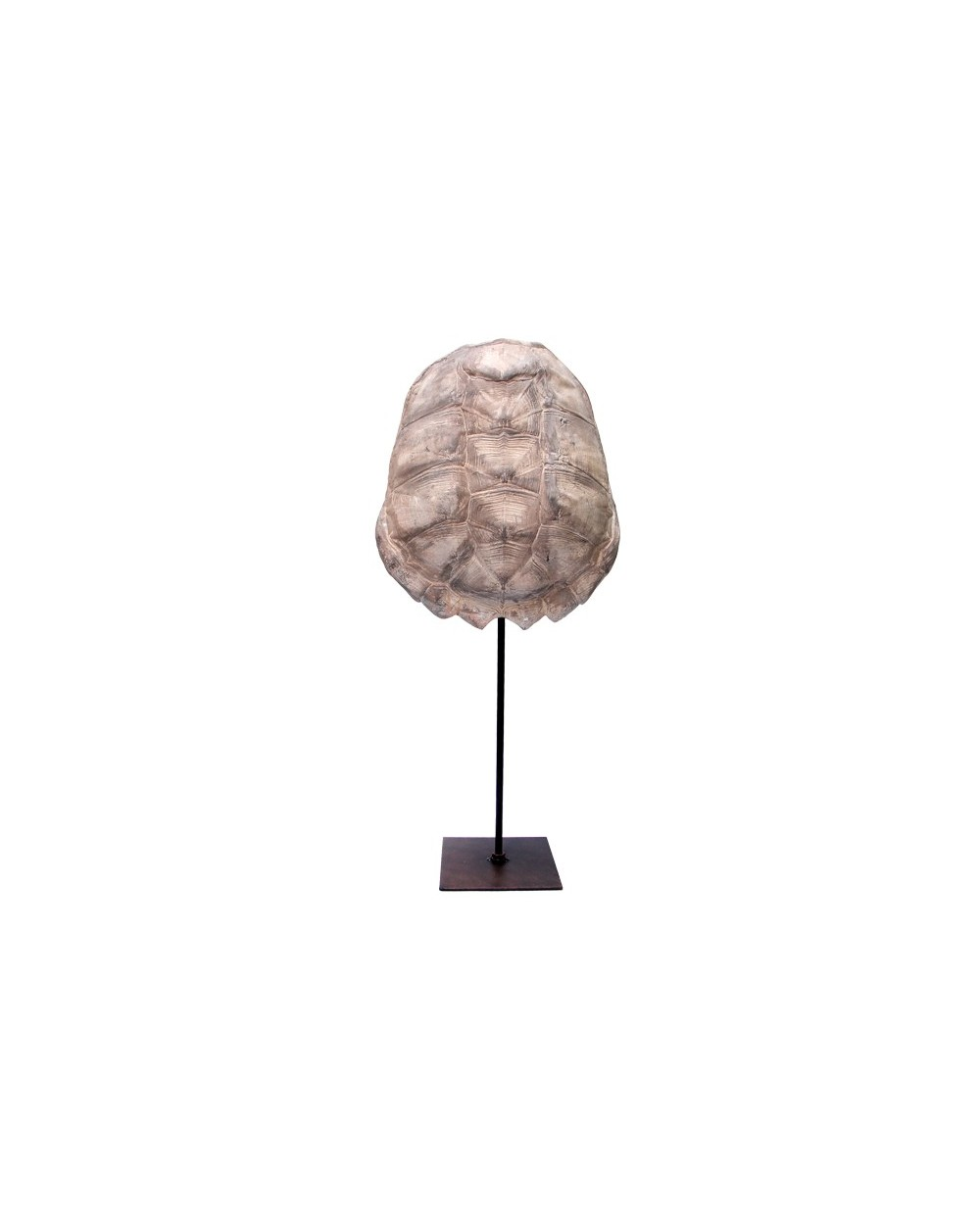 Turtle Shell Stand - Loja Querido