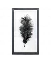 Quadro Ostrich Feather L