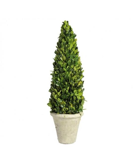 Bucho Green vaso Branco