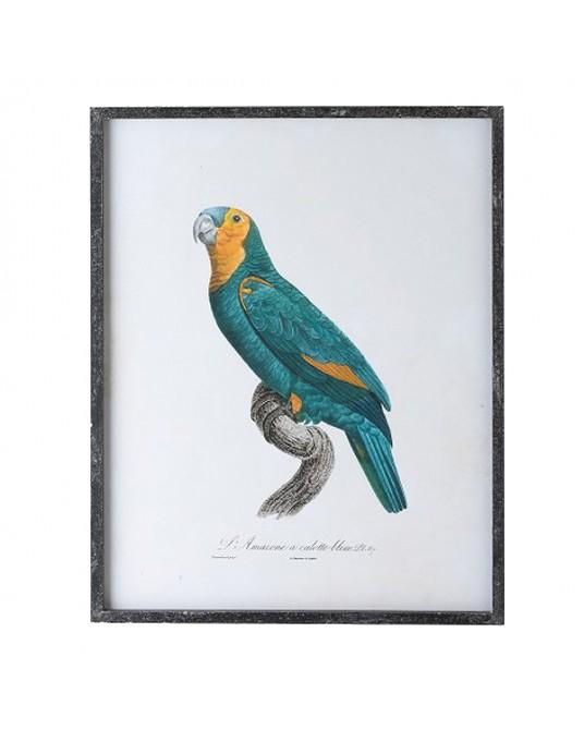 Parrot Illustration Amarelo/Azul