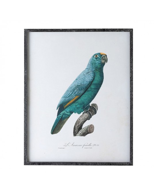 Parrot Illustration Azul