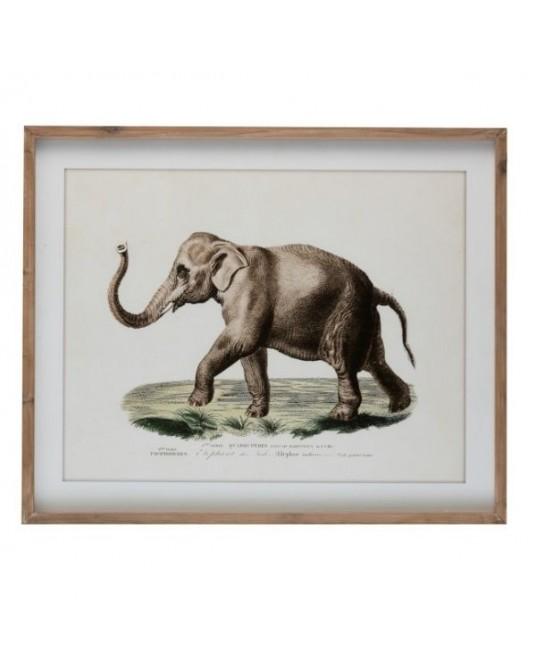 Quadro Safari Elefante - 1 un
