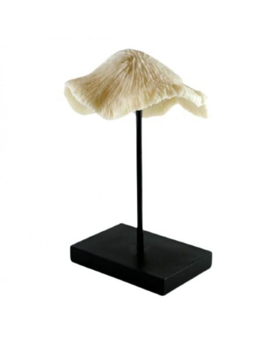 Coral Pedestal Resina